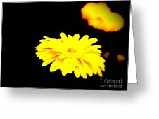 Yellow Mum On Black Backround Greeting Card
