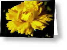 Yellow Mum With Raindrops Greeting Card