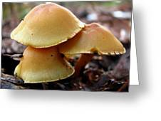 Yellow Mushrooms 2 Greeting Card