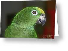 Yellow Naped Amazon Parrot Greeting Card