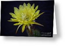 Yellow Night Blooming Cactus  Greeting Card