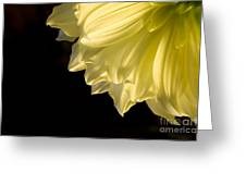 Yellow On Black Greeting Card by Ron Hoggard