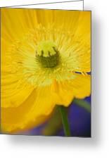 Yellow On Purple Greeting Card
