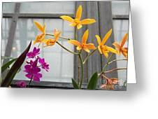 Yellow Orange And Purple Flowers Greeting Card