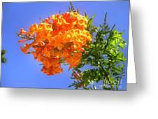 Yellow-orange Horn Flowers 01 Greeting Card