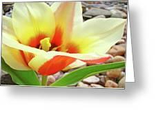 Yellow Orange Tulip Flower Art Print Baslee Troutman Greeting Card