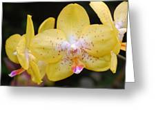 Yellow Orchid 2 Greeting Card