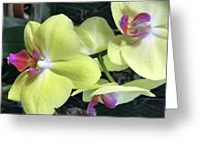 Yellow Orchid Greeting Card