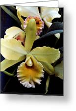Yellow Orchids Greeting Card