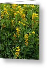 Yellow Pea 1 Greeting Card