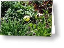 Yellow Peonia Greeting Card