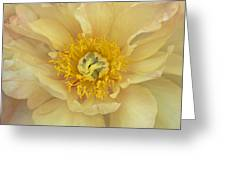 Yellow Peony Greeting Card