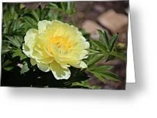 Yellow Peony Greeting Card