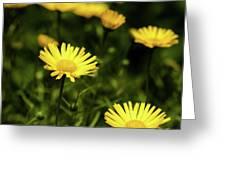 Yellow Petals Greeting Card