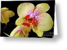 Yellow Phalaenopsis Orchid Greeting Card