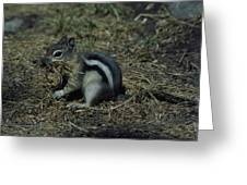 Yellow Pine Chipmunk Greeting Card