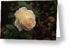 Yellow/pink Rose Greeting Card