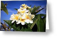 Yellow Plumeria Flowers On Maui Hawaii Greeting Card