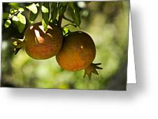 yellow Pomegranate Greeting Card by Atul Daimari