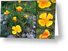 Yellow Poppies Collage  Greeting Card