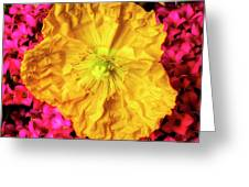 Yellow Poppy And Kalanchoe Flowers Greeting Card