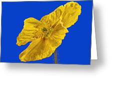 Yellow Poppy On Blue Background Greeting Card