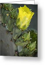 Yellow Prickly Pear Cactus Bloom Greeting Card