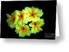 Yellow Primrose 5-25-09 Greeting Card