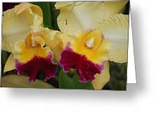 Yellow Purple Orchids Greeting Card