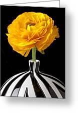 Yellow Ranunculus In Striped Vase Greeting Card