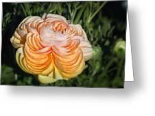 Yellow Ranunculus Greeting Card