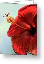 Yellow Red And Coral Hibiscus Profile Greeting Card
