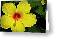 Yellow Red Hibiscus Greeting Card