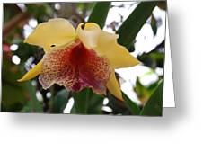 Yellow Red Orchid Greeting Card
