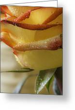 Yellow - Red Rose Greeting Card