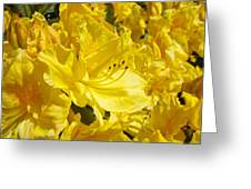 Yellow Rhodies Floral Brilliant Sunny Rhododendrons Baslee Troutman Greeting Card