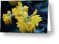 Yellow Rhododendron Flower Greeting Card