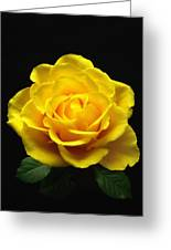 Yellow Rose 6 Greeting Card