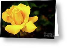 Yellow Rose - After The Rain Greeting Card