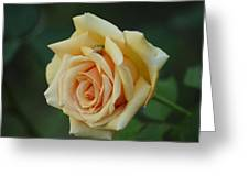 Yellow Rose And Frog Greeting Card