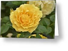 Yellow Rose IIi Greeting Card