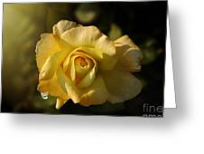 Yellow Rose In Bloom Greeting Card
