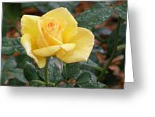 Yellow Rose In The Rain Greeting Card