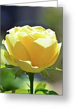 Yellow Rose In The Sun Greeting Card