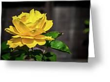 Yellow Rose Of Los Gatos Greeting Card