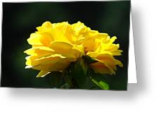 Yellow Rose Sunlit Rose Garden Landscape Art Baslee Troutman  Greeting Card