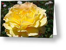 Yellow Rose Sunlit Summer Roses Flowers Art Prints Baslee Troutman Greeting Card