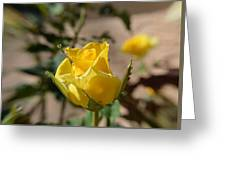 Yellow Rose With Ants Greeting Card