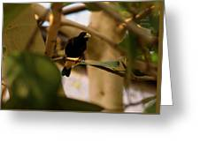Yellow-rumped Cacique 3 Greeting Card