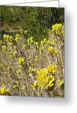 Yellow Sage Flower Greeting Card